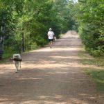 ONE jogging bear skin trail_result