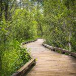 Schmeeckle Reserve